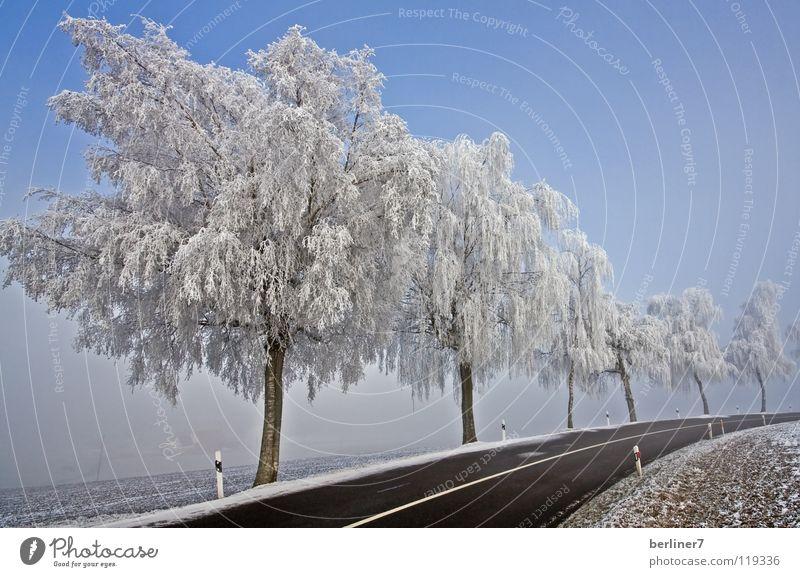 Raureif in der Rechtskurve Himmel weiß blau Winter Straße kalt Schnee Kurve Schneelandschaft Straßenrand Fernstraße Winterstimmung Straßenbegrenzung
