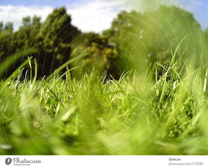 Wiese am Eli 001 grün Sommer Wiese Gras Park Mönchengladbach