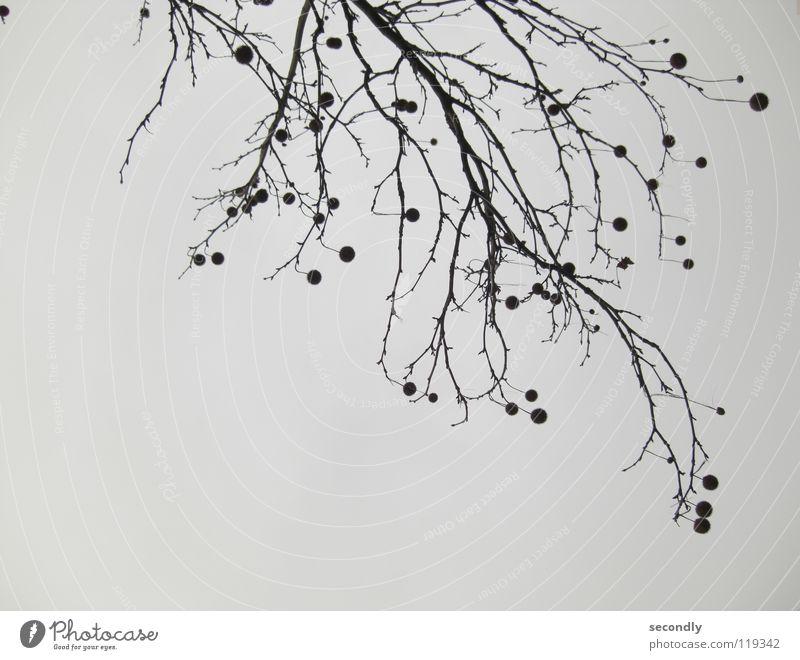 anti gravitation Himmel Baum schwarz Herbst grau Ast Kugel Zweig Stachel schlechtes Wetter gedreht