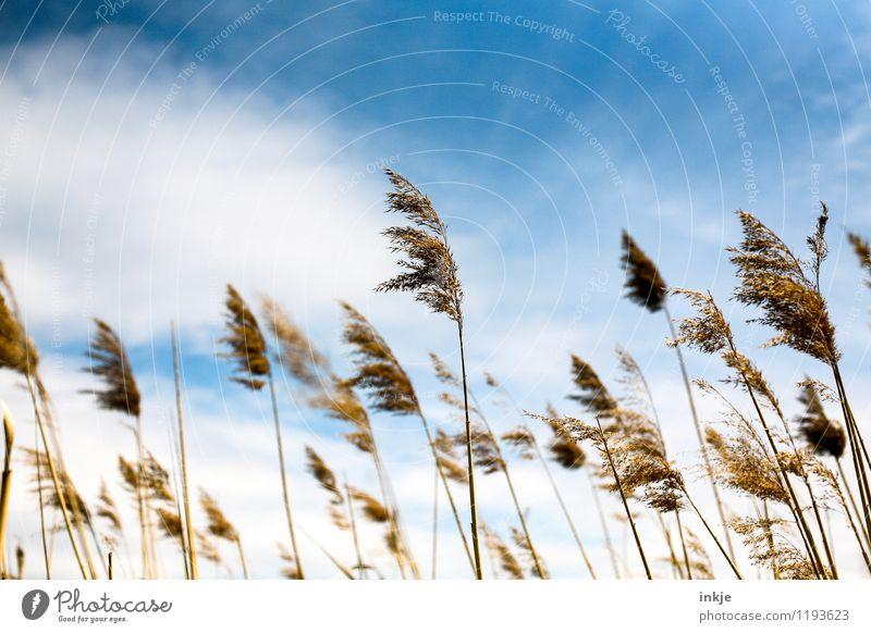 *hachja* Natur Pflanze Himmel Wolken Frühling Sommer Klima Schönes Wetter Gras Wildpflanze Gräserblüte Feld blau Stimmung Idylle sommerlich Sommerfarbe Farbfoto