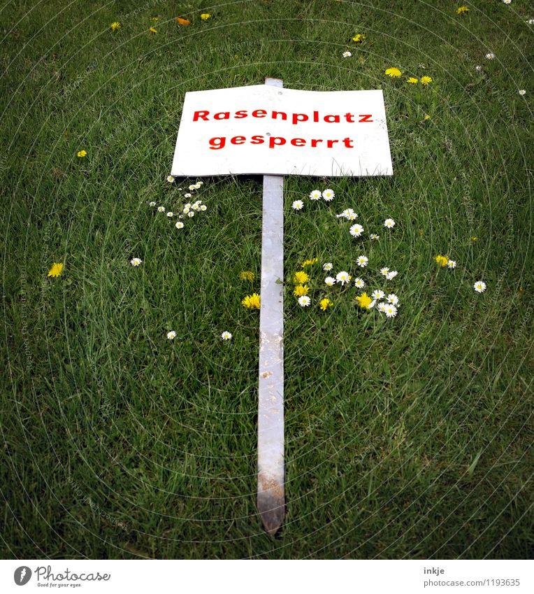 *ochnö* grün Sommer rot Gefühle Wiese Spielen Stimmung Freizeit & Hobby Schilder & Markierungen Schriftzeichen Hinweisschild Sportrasen Gänseblümchen Verbote