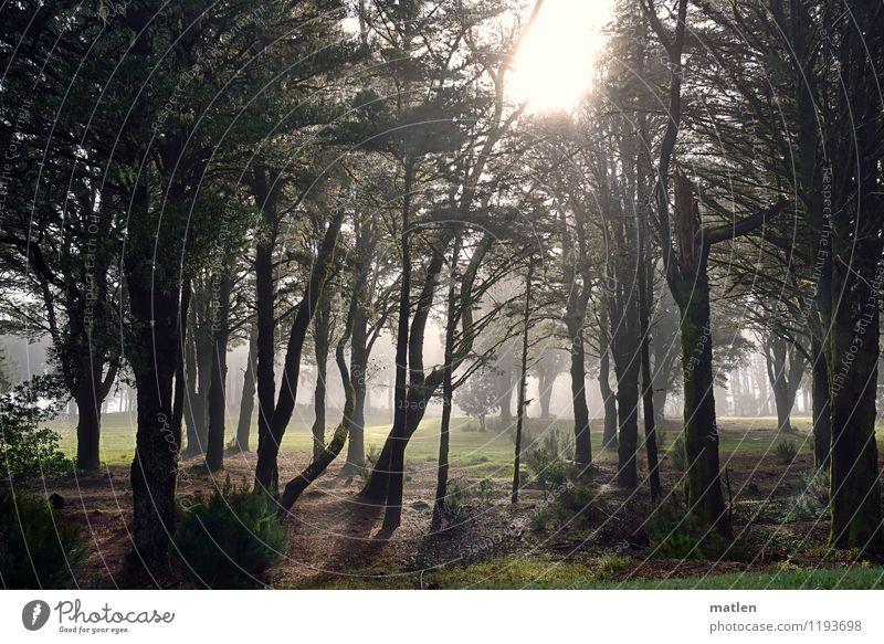 moinmoin Umwelt Natur Landschaft Pflanze Himmel Sonnenlicht Wetter Nebel Baum Gras Wald braun grün weiß Beleuchtung kämpfen Farbfoto Gedeckte Farben