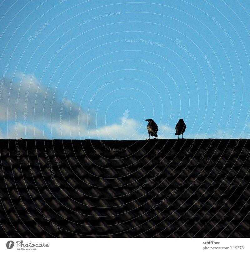 Rabenscheidung I Himmel blau Wolken Zusammensein Vogel Tierpaar paarweise Dach Konflikt & Streit Trennung Rabenvögel Krähe schweigen