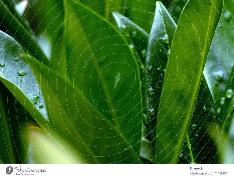 Tröpfelndes Grün Natur Wasser Baum Blume grün Pflanze Wiese Blüte Gras Regen Nebel Umwelt Wassertropfen nass Seil Rasen