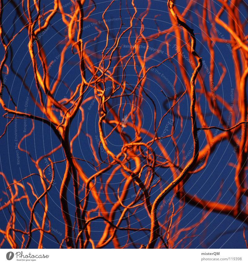 Insane in the membrain. durcheinander chaotisch Quadrat rot verrückt Gehirn u. Nerven Muster unordentlich skurril bizarr Natur finden Korkenzieher-Weide