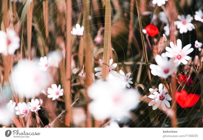 stroh Natur Pflanze Sommer schön Blume Blatt Wärme Blüte Frühling Herbst Wiese Gras Garten Park Feld Wachstum