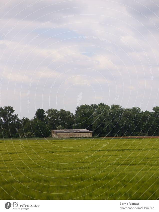 aussenstelle Umwelt Natur Landschaft Himmel Wolken Pflanze Baum Gras blau grün Scheune Einsamkeit ruhig Landwirtschaft Feld Wachstum Getreide Wind Gebäude