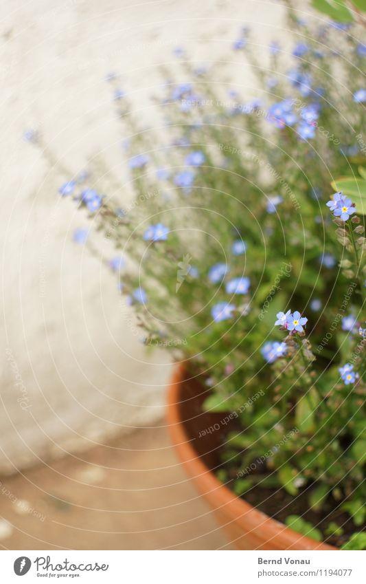 *\ Pflanze Blume blau braun grau grün violett Zierpflanze Garten Blüte Topfpflanze Blumentopf Terrasse rund Kurve klein schön zart Wachstum Frühling Terrakotta