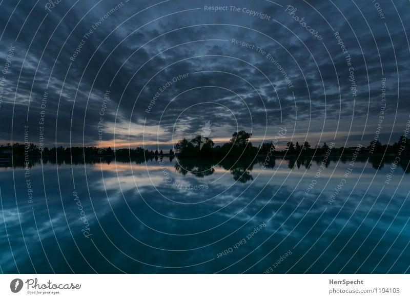 Morgenblauen Umwelt Natur Landschaft Wasser Baum Seeufer ästhetisch frisch schön Silhouette Baumreihe Morgendämmerung Dämmerung Wolkenhimmel Wolkenformation