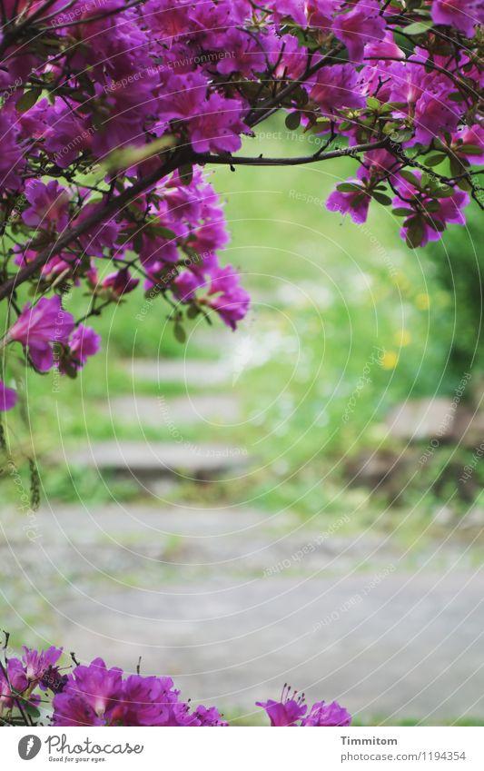 Mal nach dem Garten sehen. Umwelt Natur Pflanze Blüte Stein Blick ästhetisch natürlich grün violett Gefühle Wege & Pfade Bodenplatten Sandstein Farbfoto