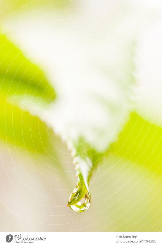 Reine Natur Pflanze schön grün Wasser Blatt ruhig Umwelt Leben Gesundheit Denken glänzend träumen Regen frisch elegant