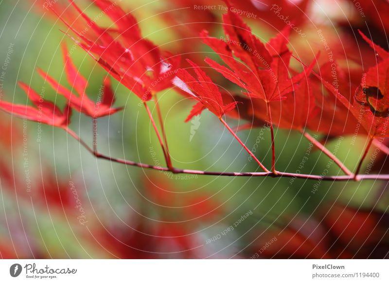 Sommerfarben Natur Ferien & Urlaub & Reisen Pflanze Baum rot Blatt Tier Wald Gefühle Stil Glück Holz Garten Stimmung Park
