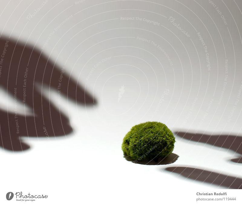 Moos kügelchen Hand weiß grün gelb Finger Algen Schattenspiel Freisteller Laubmoos grün-gelb Eukaryot