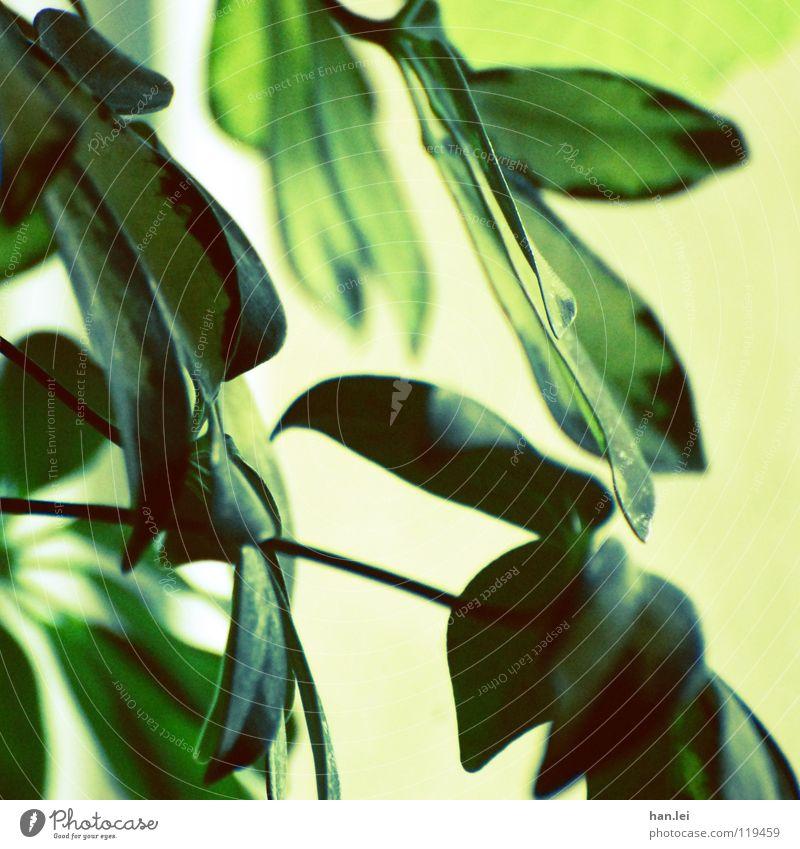 Zimmerpflanze Stil Dekoration & Verzierung Pflanze Park Urwald gelb grün grün-gelb Photosynthese Farbfoto Experiment Menschenleer