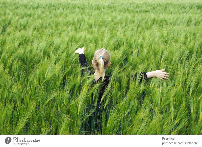 Im Kornfeld Mensch Kind Natur Pflanze grün Hand Landschaft Mädchen Umwelt natürlich feminin Haare & Frisuren Kopf Feld Körper Kindheit