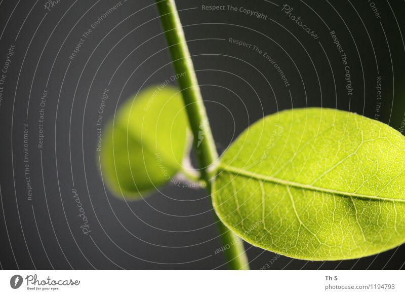 Blatt Natur Pflanze Frühling Sommer Blühend ästhetisch authentisch einfach elegant natürlich grün Frühlingsgefühle Gelassenheit geduldig ruhig einzigartig