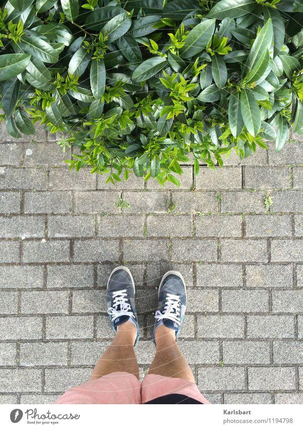 Von oben Natur gespräch reden Kommunizieren Kommunikation gehen Spaziergang spazieren Sommer Sommerurlaub ökologisch Naturliebe Umwelt Begegnung Straße