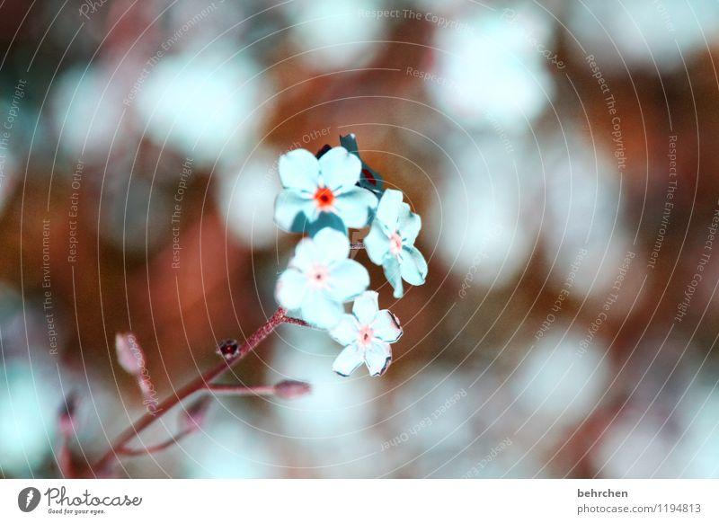 zerbrechlich Natur blau Pflanze schön Sommer Blume Blatt Frühling Blüte Wiese Herbst klein Garten braun Park Feld