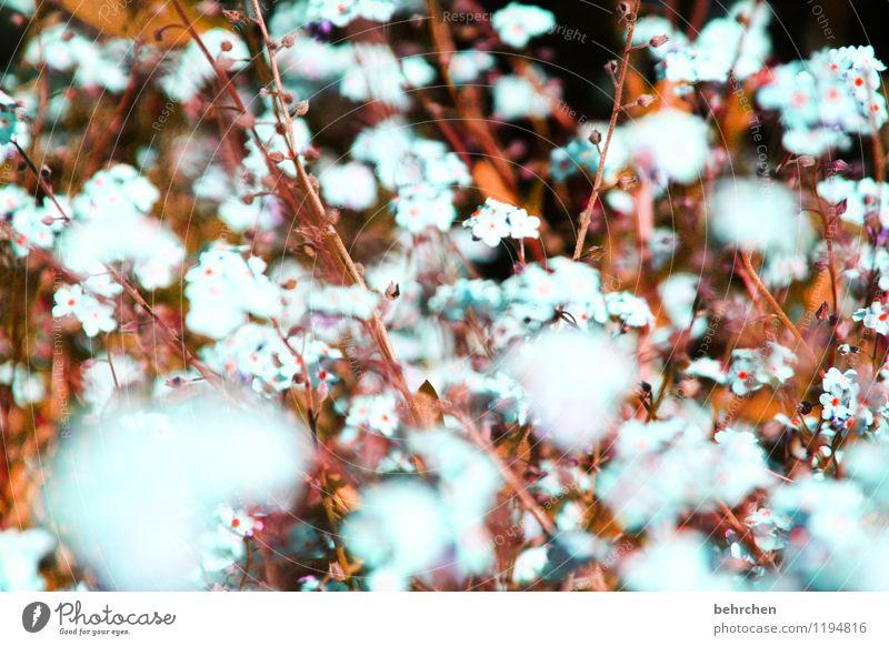 vergissmeinnichtwölkchen Natur blau Pflanze schön Sommer Blume Blatt Frühling Blüte Wiese Herbst Garten braun Park Wachstum fantastisch