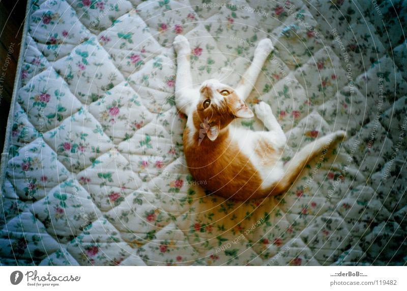 Matratzekatze Katze weiß Tier gelb Tierjunges Leben klein liegen elegant Zufriedenheit genießen niedlich weich Sauberkeit Neugier Fell