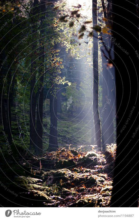 Grüne Lunge Natur schön grün Sommer Baum Erholung ruhig Freude Wald Holz Gesundheit außergewöhnlich Deutschland Zufriedenheit genießen Lächeln