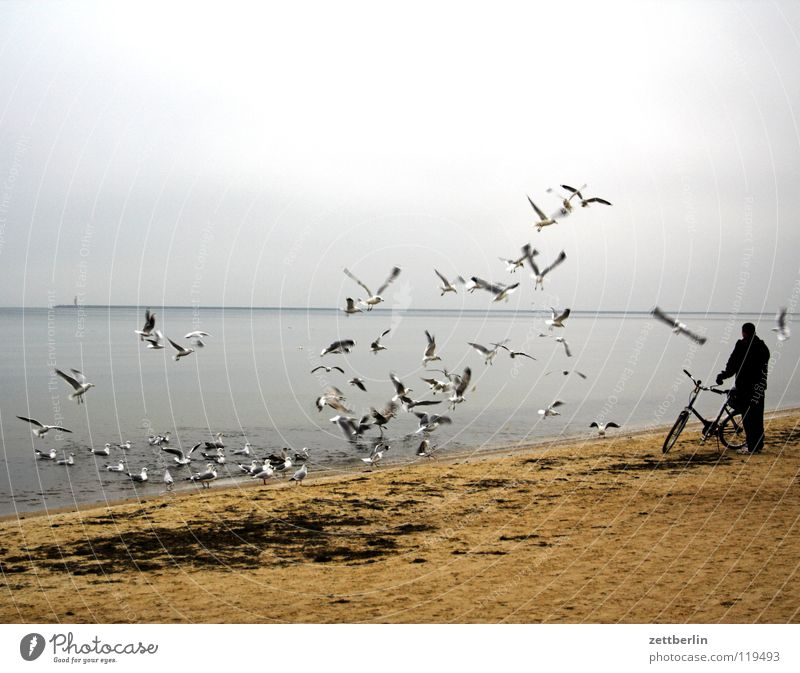 Polnische Möwen Vogel Vogelschwarm Meer Strand Horizont Leuchtturm Usedom Mann Fahrrad füttern stehen Fahrradtour Strandspaziergang Luft Nebensaison Winter