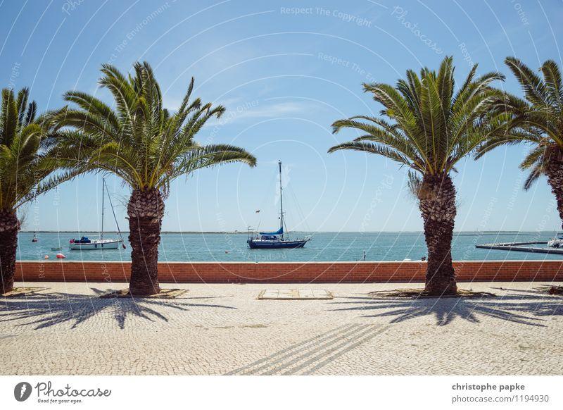 zwischen Palmen Ferien & Urlaub & Reisen Tourismus Sommer Sommerurlaub Sonne Meer Himmel Wolkenloser Himmel Pflanze Baum Küste Schifffahrt Sportboot Jacht