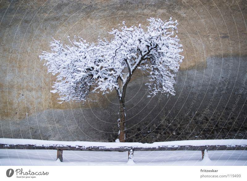 Einsamer Baum Winter Schnee Glurns Italien Altstadt Menschenleer Mauer Wand historisch grau ruhig Einsamkeit Südtirol Zaun Vinschgau Gedeckte Farben