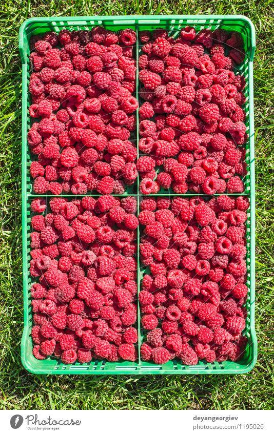 Himbeeren in einer grünen Kiste Sommer rot Blatt schwarz natürlich Garten hell Frucht frisch lecker Beeren Dessert Diät Vitamin Zutaten