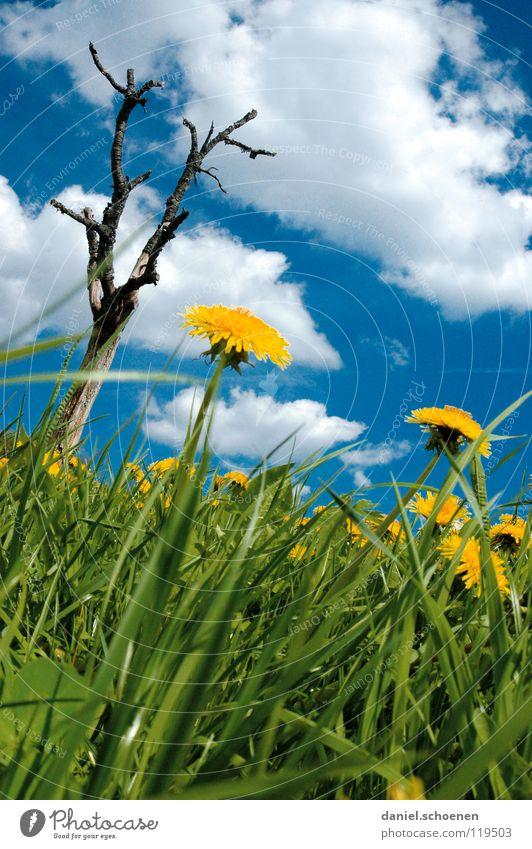 Hochformatsfrühlingswiese Himmel Baum Blume grün blau Sommer Ferien & Urlaub & Reisen gelb Wiese Blüte Gras Frühling Rasen Pause Freizeit & Hobby Löwenzahn
