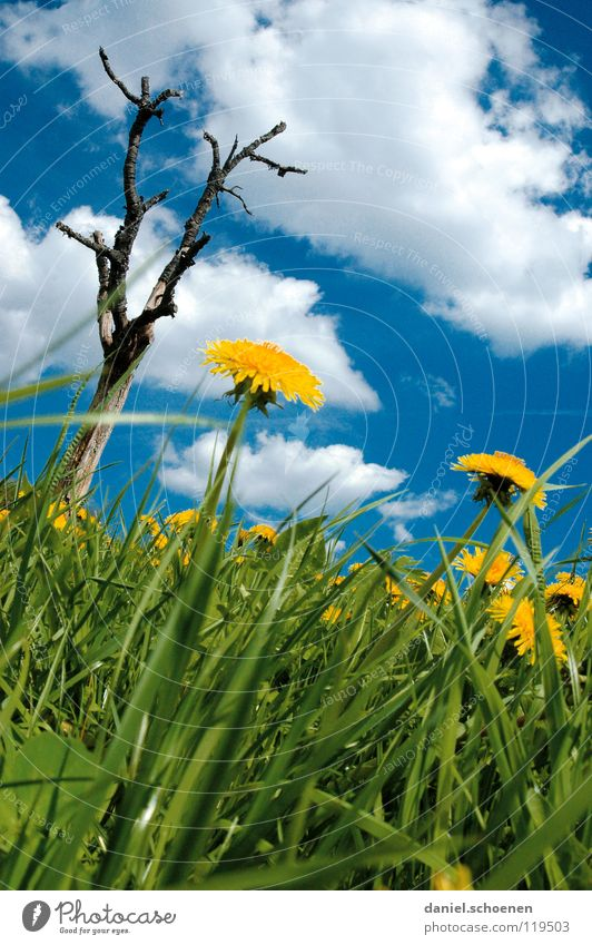 Hochformatsfrühlingswiese Wiese Sommer Frühling Schönes Wetter Freizeit & Hobby Baum Ferien & Urlaub & Reisen Löwenzahn Blume Blüte Gras Pause grün Alm