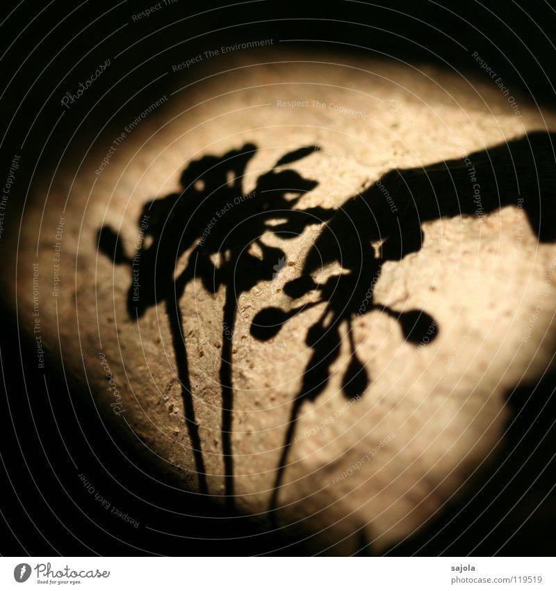 in the spotlight Natur Baum Pflanze Blume schwarz Umwelt Frucht Ast Blütenknospen Lichtspiel Blattknospe Schatten sprießen