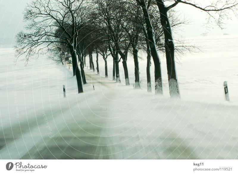 Test Drive Winter weiß Baum Baumstamm Geäst Baumkrone kalt Erzgebirge Feld Schneesturm Sandverwehung Geländewagen Allee Landstraße Geschwindigkeit Sicherheit