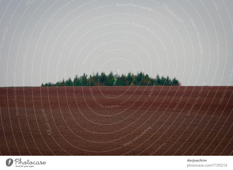Wald Insel grün Baum Landschaft ruhig Freude Frühling Holz außergewöhnlich braun Deutschland Feld Lächeln genießen fantastisch