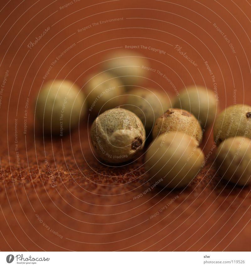 Grüner Pfeffer I Ernährung Kochen & Garen & Backen Scharfer Geschmack Kräuter & Gewürze lecker Indien Korn Produktion Kletterpflanzen nachsichtig Pfefferkörner