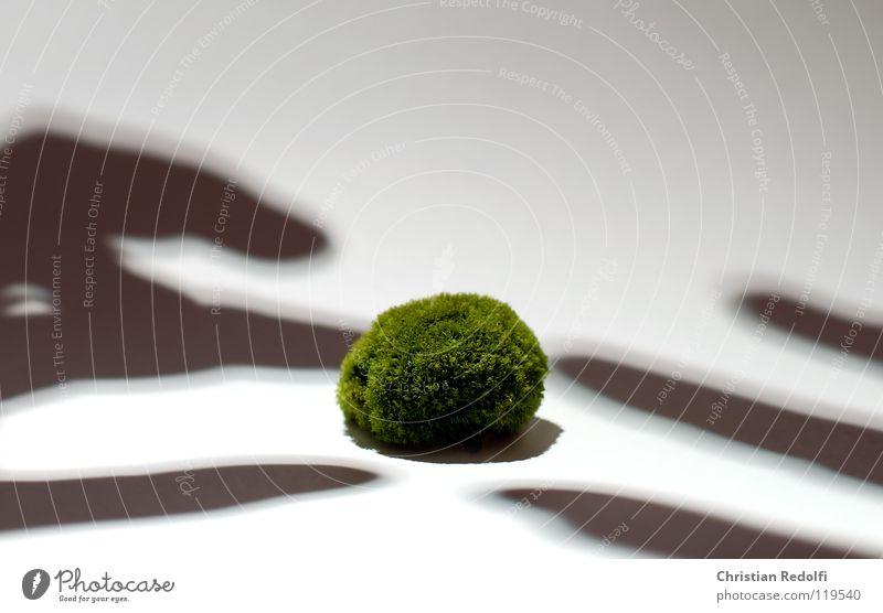 Moos kügelchen Hand weiß grün gelb Finger Algen Schattenspiel Laubmoos grün-gelb Eukaryot