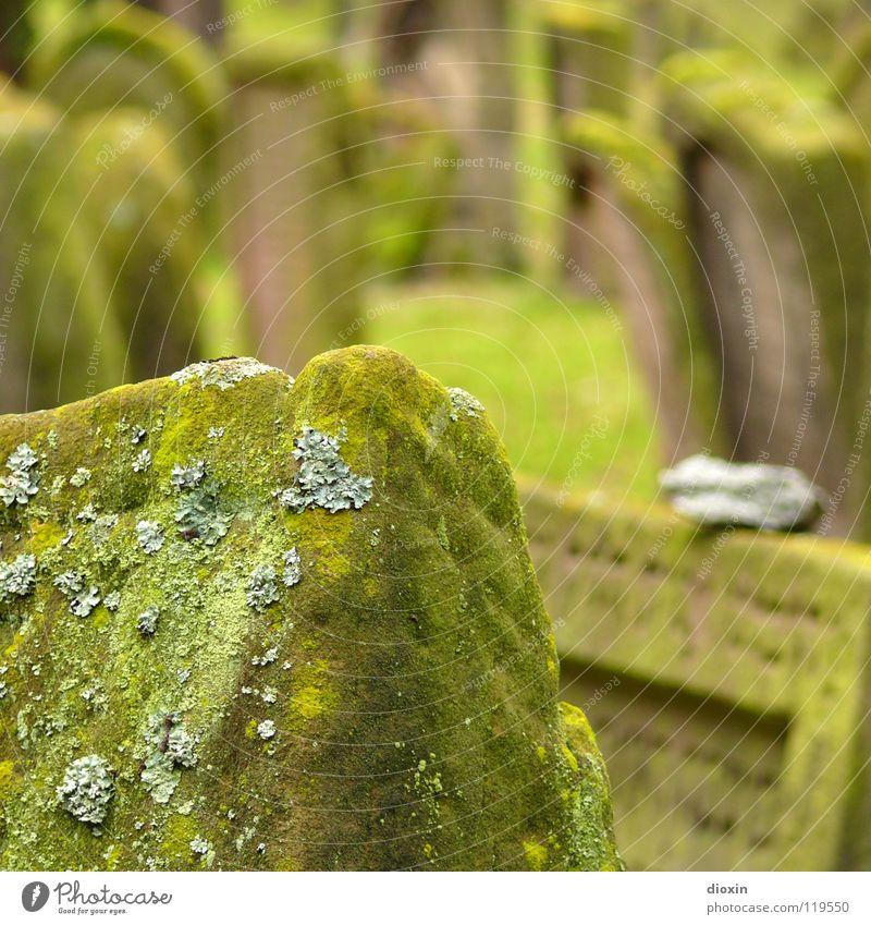 Heiliger Sand 1 Gras Moos Stein Zeichen alt grün Güte trösten Traurigkeit Sorge Trauer Tod Verzweiflung Religion & Glaube Vergänglichkeit Friedhof Worms