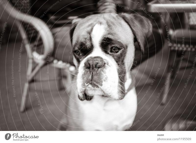 Nie wieder | ohne Leckerli Hund Tier Traurigkeit Gefühle Stimmung Lifestyle Freundschaft Zufriedenheit Freizeit & Hobby nachdenklich warten niedlich