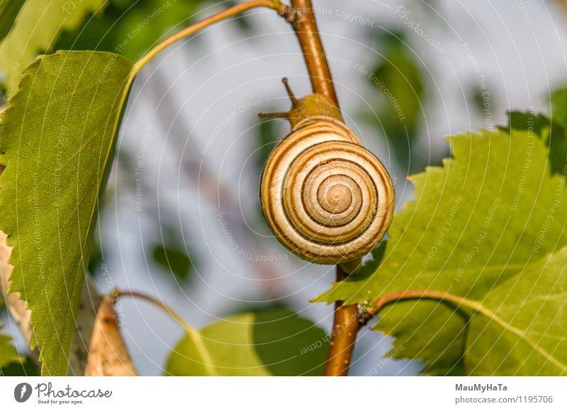 Garten Schnecke Himmel Natur Pflanze Sommer Baum Tier Wald Frühling Park Feld authentisch Klima Schönes Wetter berühren