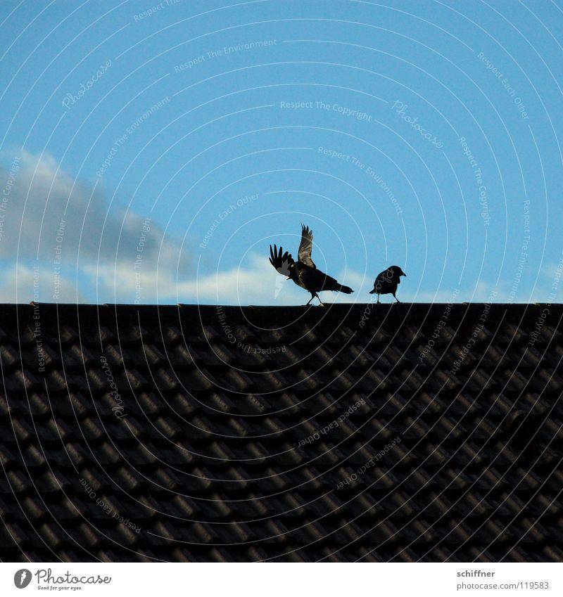 Rabenscheidung II Himmel blau Wolken Zusammensein Vogel Tierpaar paarweise Dach Konflikt & Streit Trennung Versicherung Ehe Rabenvögel Krähe schweigen Scheidung