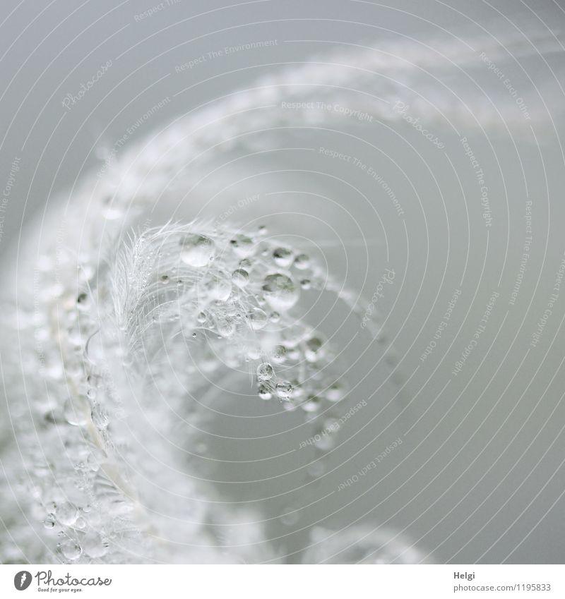 Federschmuck... Natur Tier Wassertropfen Frühling Regen glänzend hängen außergewöhnlich frisch schön einzigartig klein nass natürlich grau weiß ästhetisch