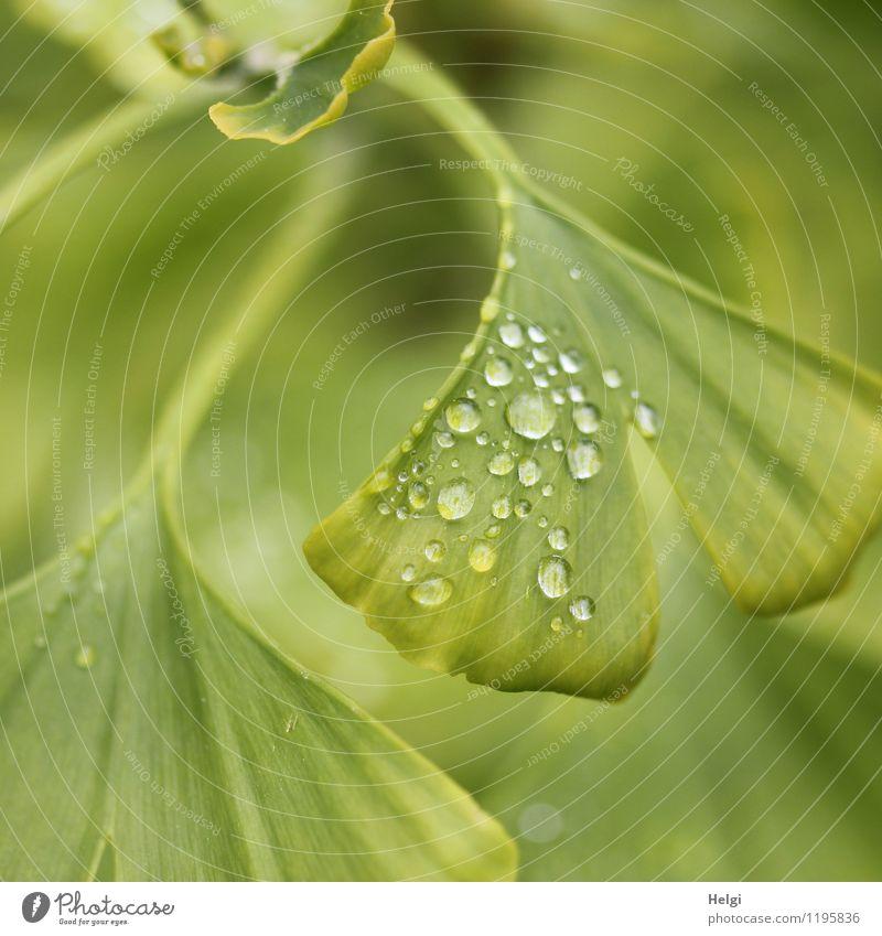 Naturheilmittel... Natur Pflanze grün Baum Blatt Umwelt Leben Frühling natürlich außergewöhnlich Park Regen Wachstum ästhetisch Wassertropfen nass