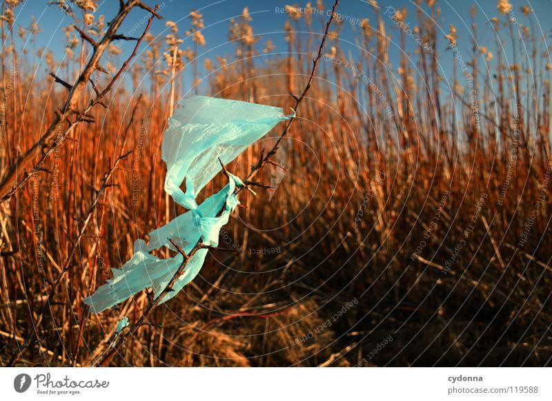GEFUNDEN Himmel Natur blau schön rot Pflanze Blume Farbe Winter ruhig Umwelt Tod Leben Wärme Freiheit Luft