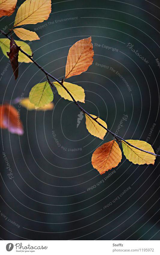 fast schon Herbst Natur Pflanze Blatt Zweig Ast Zweige u. Äste Buche Buchenblatt Herbstlaub Park Wald braun gelb herbstlich Herbstfärbung