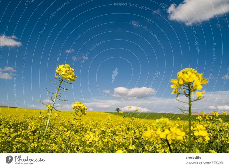 raps # 14 Raps Feld Frühling ökologisch Diesel Kohlendioxid Klimawandel gelb Streifen Stengel Sauerstoff Panorama (Aussicht) Wolken Bayern ländlich Blattgrün