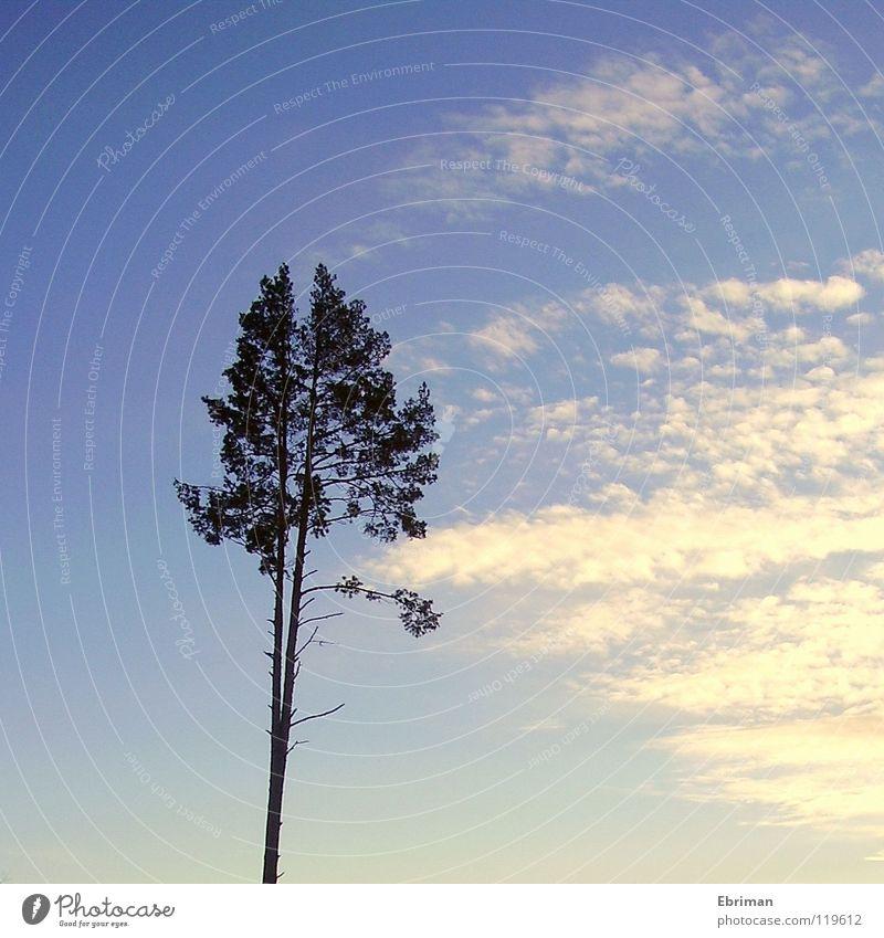 Gespaltene Persönlichkeit Himmel Natur blau weiß Baum Sonne Einsamkeit Wolken dunkel oben Küste See hell hoch Hochhaus Ast
