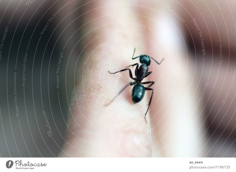 Waldameise Ausflug Camping Umwelt Tier Wildtier Käfer Ameise Insekt Insektenschutz Ameisensäure Ameisenstraße 1 krabbeln authentisch schwarz Lebensfreude Mut
