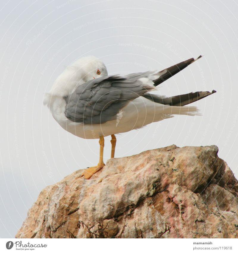 Versteckspiel Teil 1 Meer Berge u. Gebirge Stein Fuß See Vogel Felsen Feder Flügel verstecken Möwe kratzen