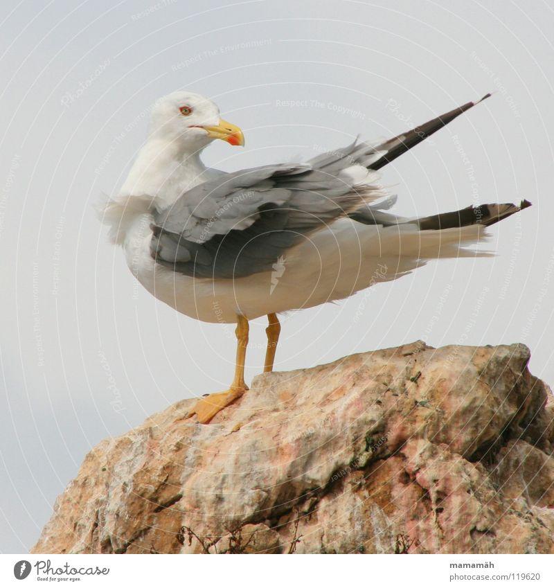 Versteckspiel Teil 2 Meer Auge Berge u. Gebirge Stein Fuß See Vogel Felsen Feder Flügel Möwe Schnabel Tier