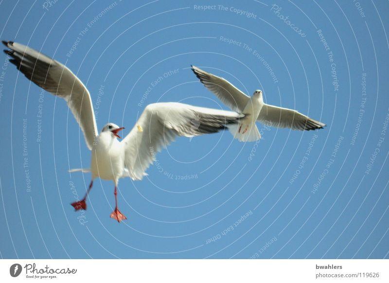 meins Himmel blau weiß Sommer Freiheit See 2 Luft Vogel fliegen Feder Flügel Möwe füttern Bodensee